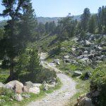 Der Zirbenweg in Tirol