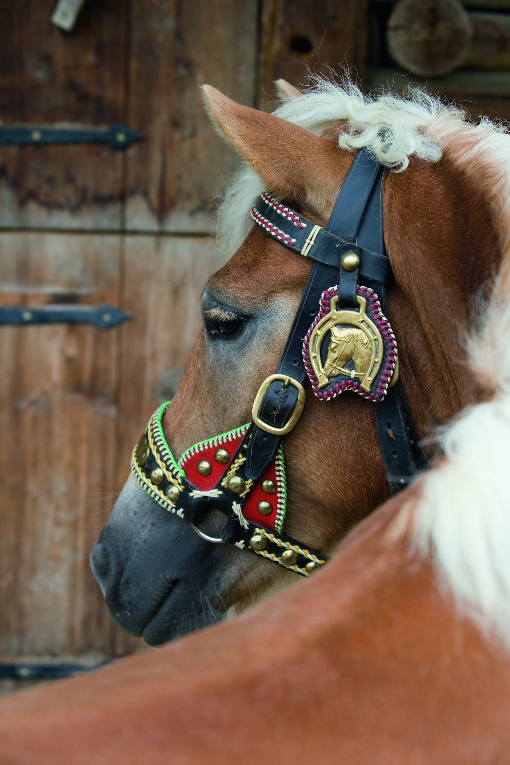 Pferdeherbst Mils – im Herbst ist tierisch was los in der Region Hall-Wattens!
