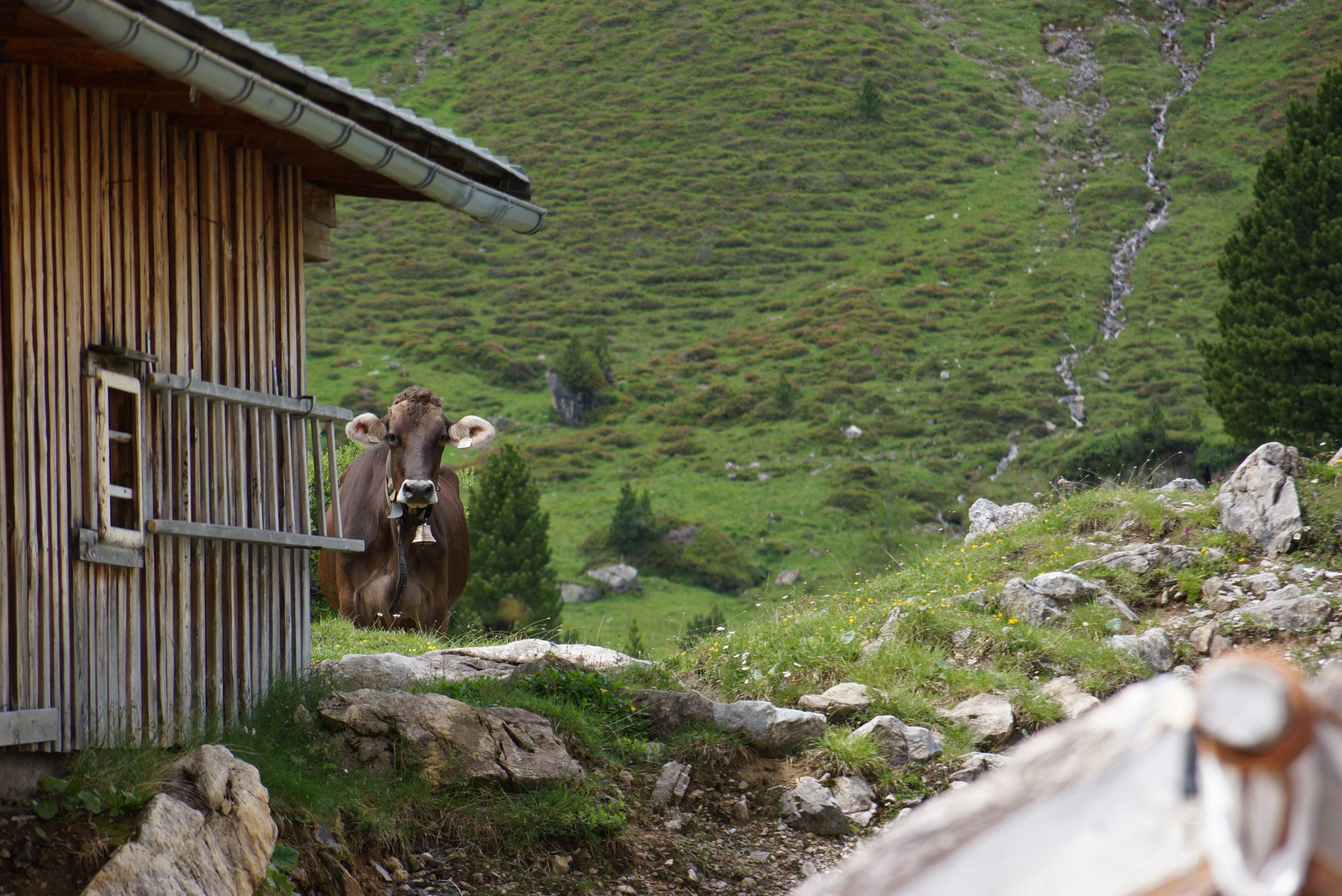 Wo Kühe Urlaub machen, muss es einfach schön sein!