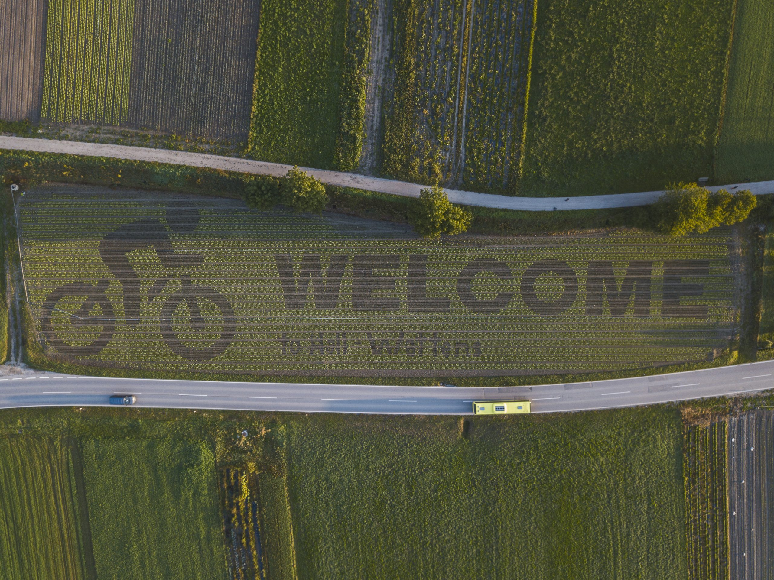Kreatives Gemüse: WM-Salatfeld in Thaur