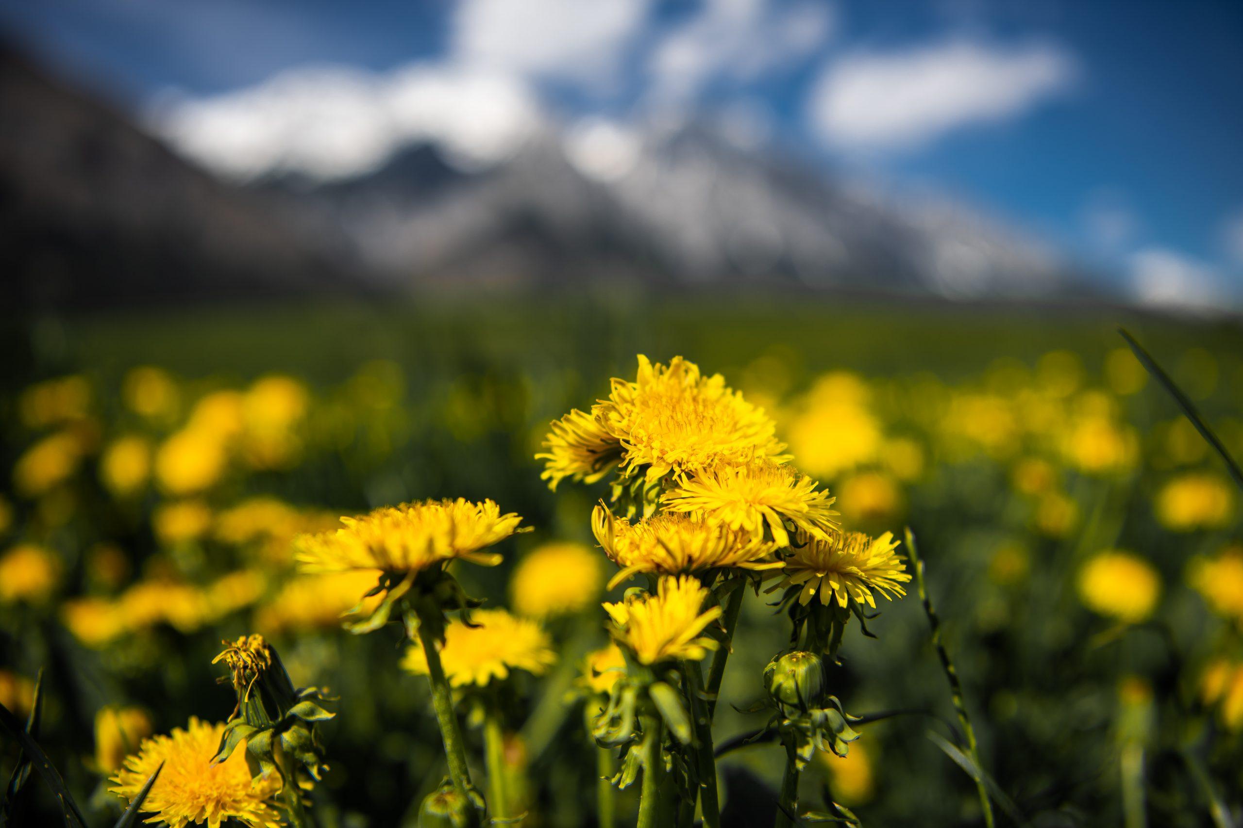 Auf der Spur der Biene: Wildkräuterspaziergang