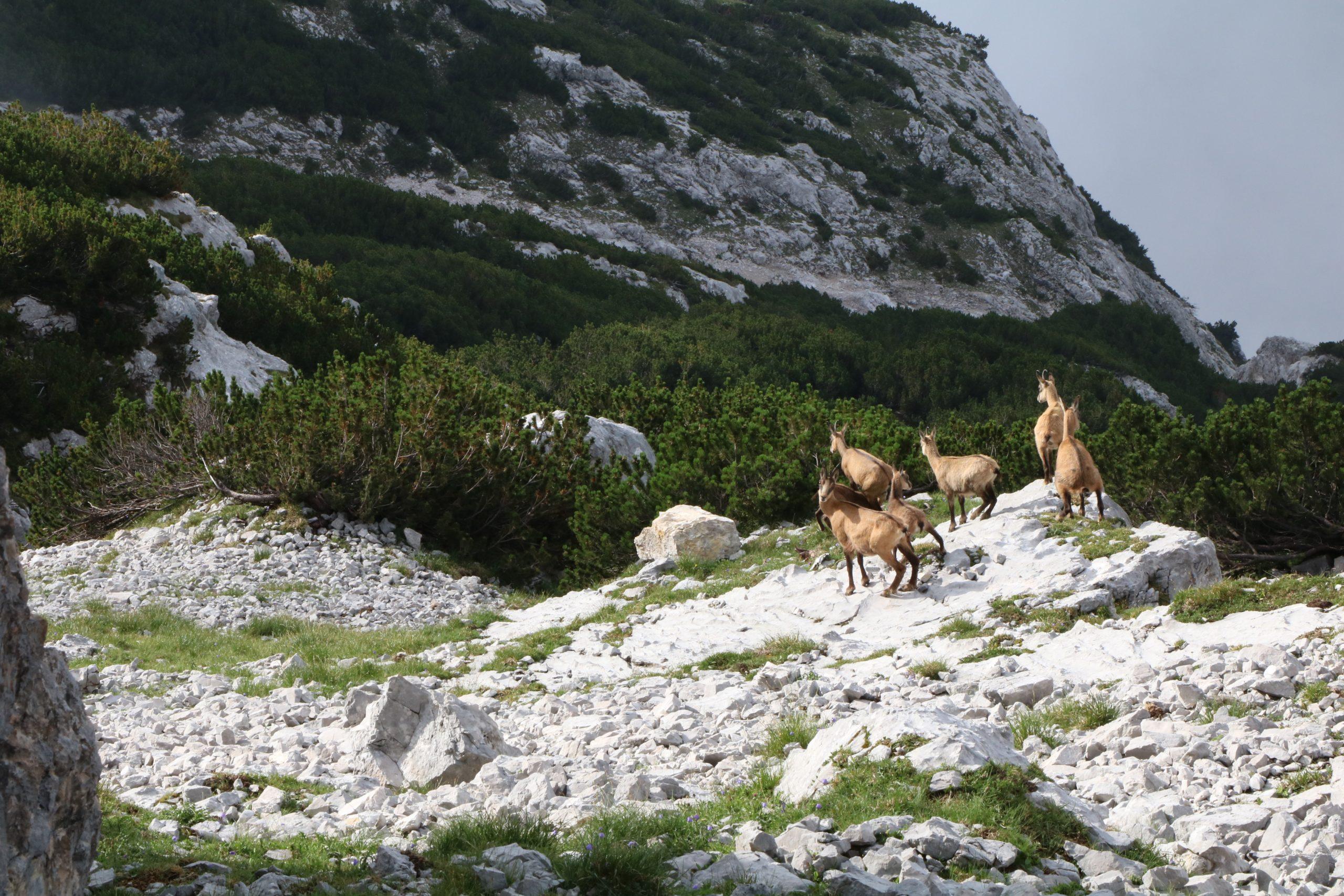 Naturpark des Jahres 2020: Der Naturpark Karwendel